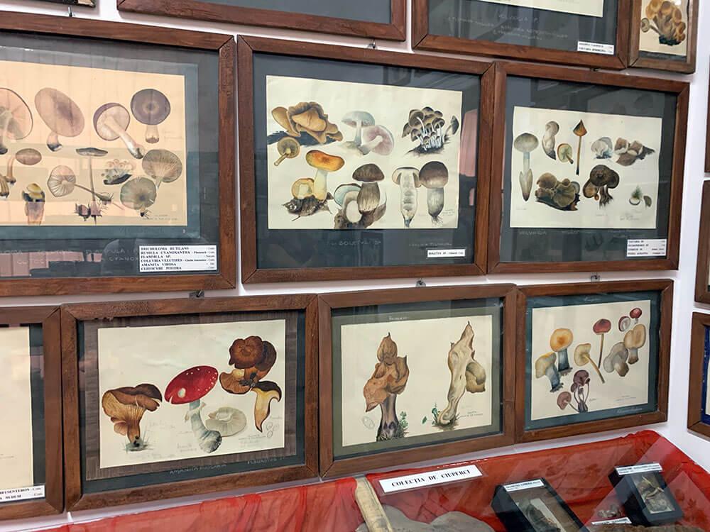 que ver en bucarest: museo del jardin botanico