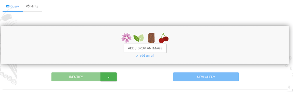 identificar plantas con plantnet via web