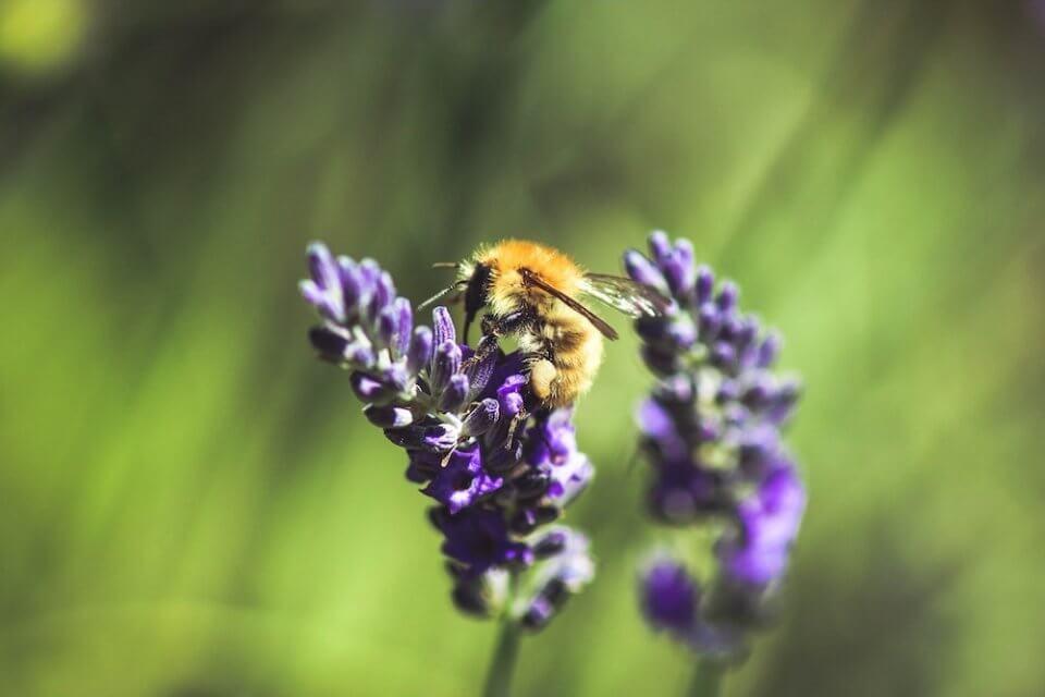 qué son las plantas medicinales y para que sirven