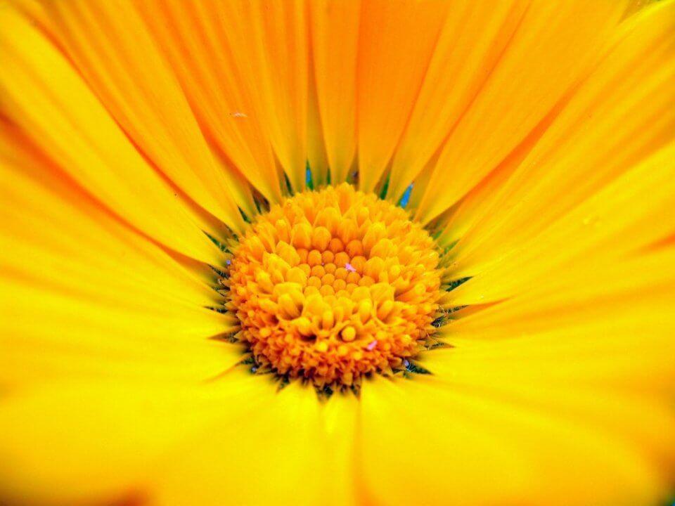 qué son las plantas medicinales