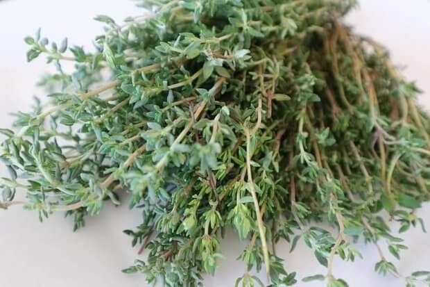 el tomillo: una de la plantas medicinales comunes en casa