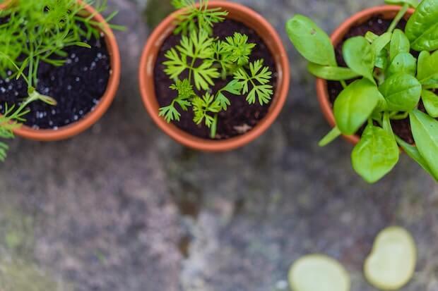 cultivar plantas aromaticas para cocinar