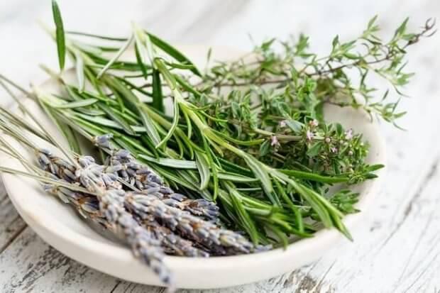 plato con algunas ramas de 10 plantas medicinales comunes: lavanda, romero, tomillo.