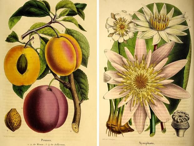 Belgique horticole v.1 Liege ilustraciones botanicas antiguas, biodiversity heritage library