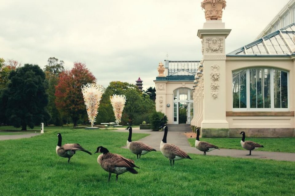 Gansos en kew gardens london, uno de los jardines botanicos más bonitos del del mundo