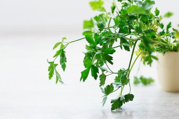 nombres de plantas aromaticas para cocinar, perejil