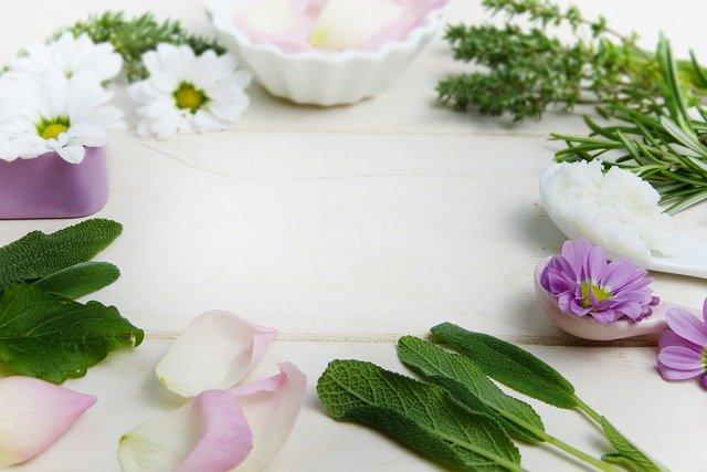 muestras de plantas medicinales estudiadas por la fitoterapia