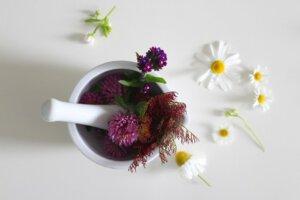 Curso de Herboristería y Fitoterapia, Gremio d'Herbolaris @ Curso online