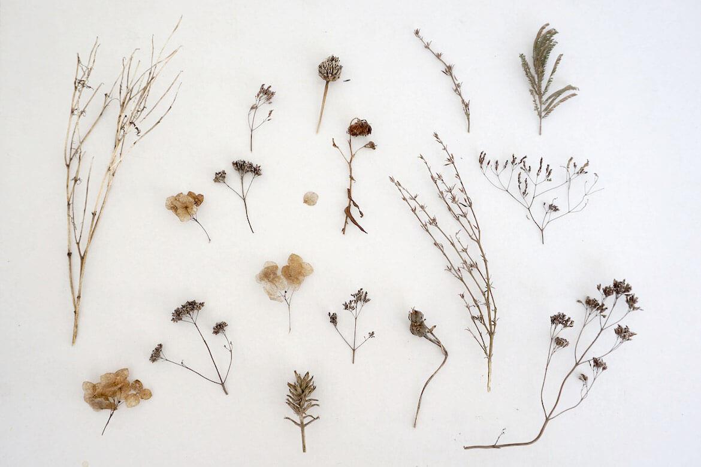 herbario virtual españa