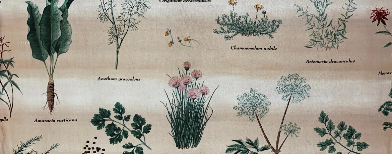 ilustración con plantas aromáticas