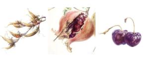 Arte botánico: comienza tu viaje @ Estudi ArtVallès | Barcelona | Catalunya | España