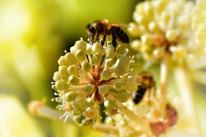 principios activos de las plantas medicinales