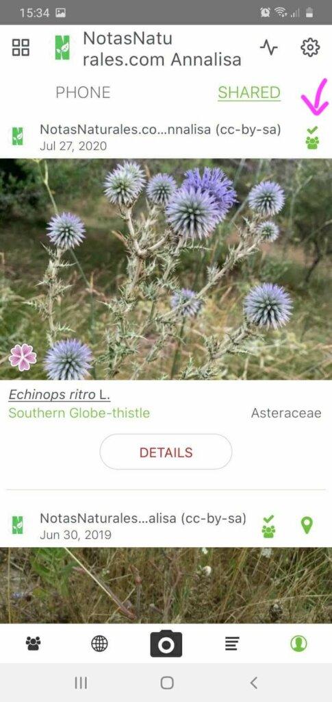 identificar plantas con foto