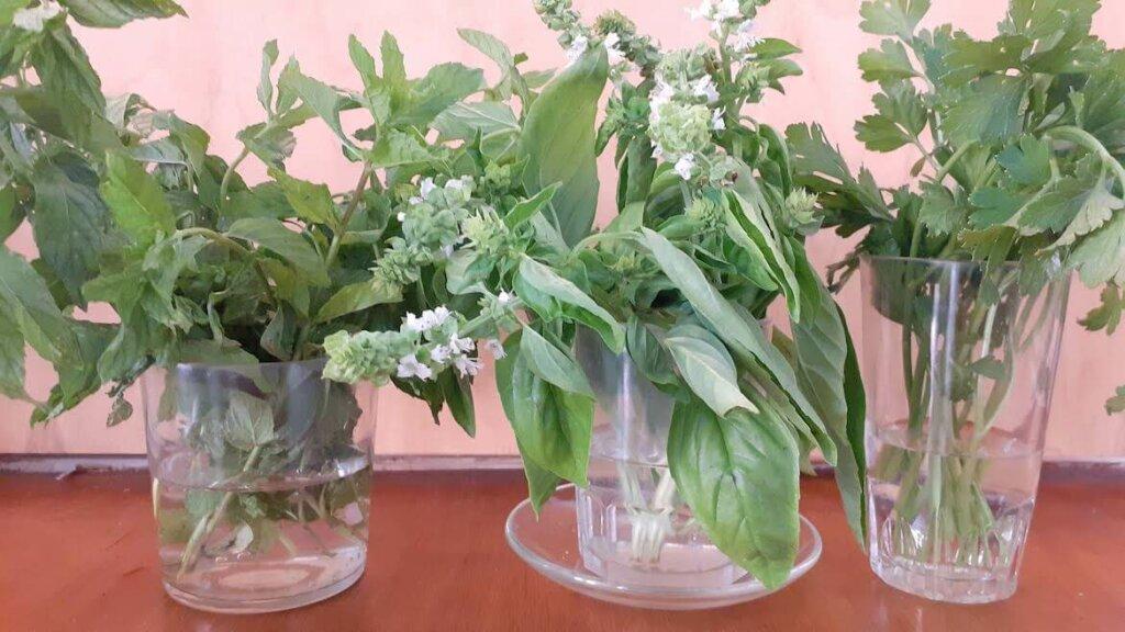 como conservar hierbas aromaticas frescas