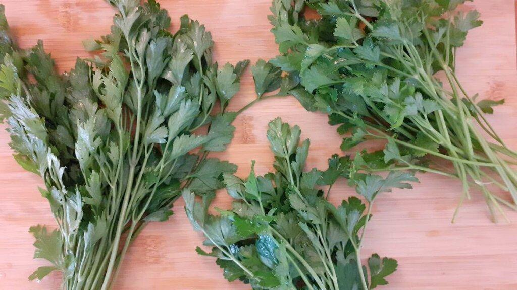 conservación de hierbas aromáticas