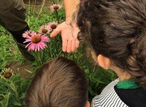 Visita guiada cultivos ecológicos aromáticas @ Orballo | Donín | Galicia | España