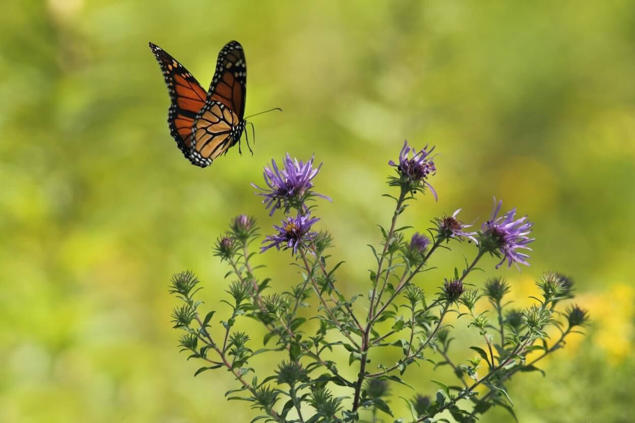 una mariposa y flores, biodiversidad silvestre