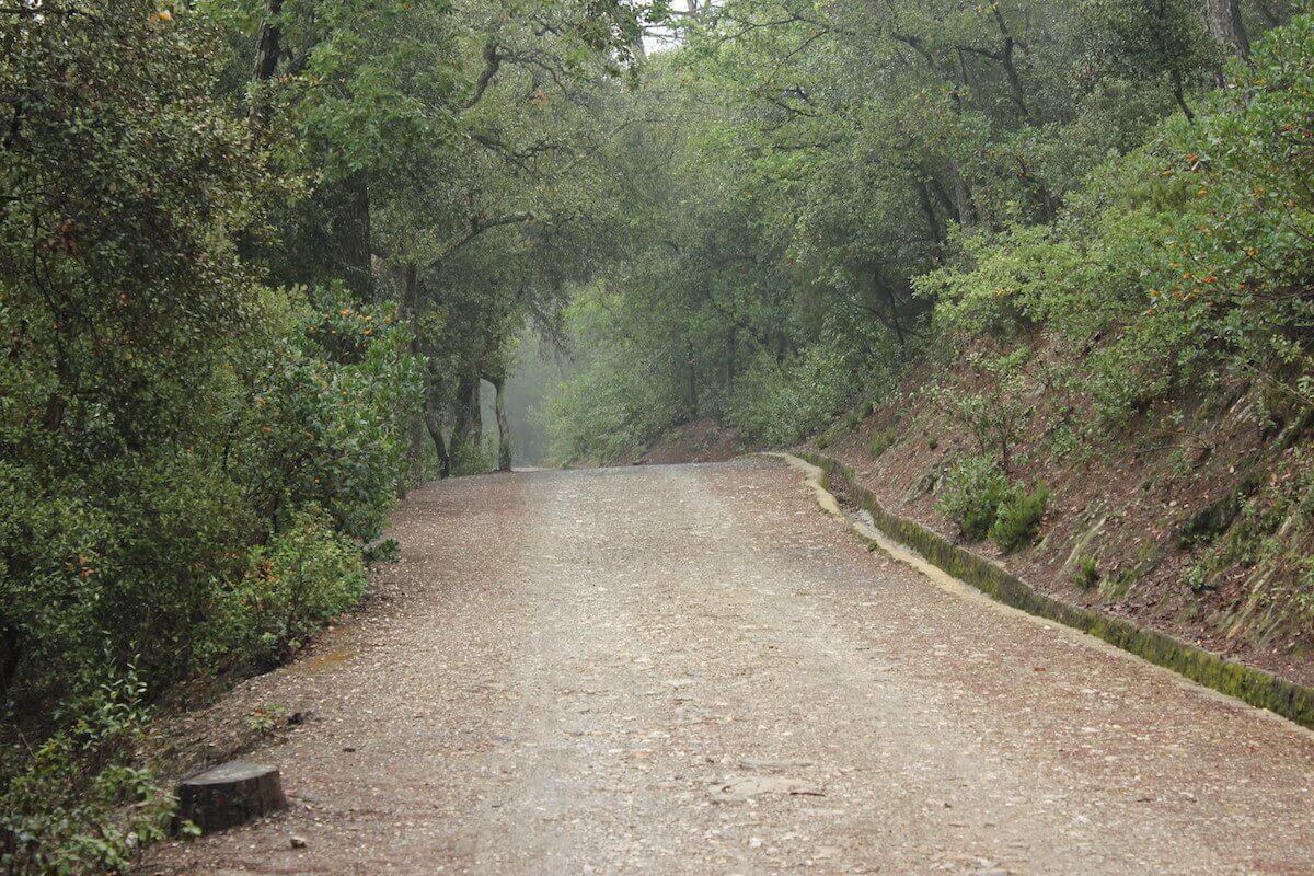 Senderos del Parque del Collserola en otoño