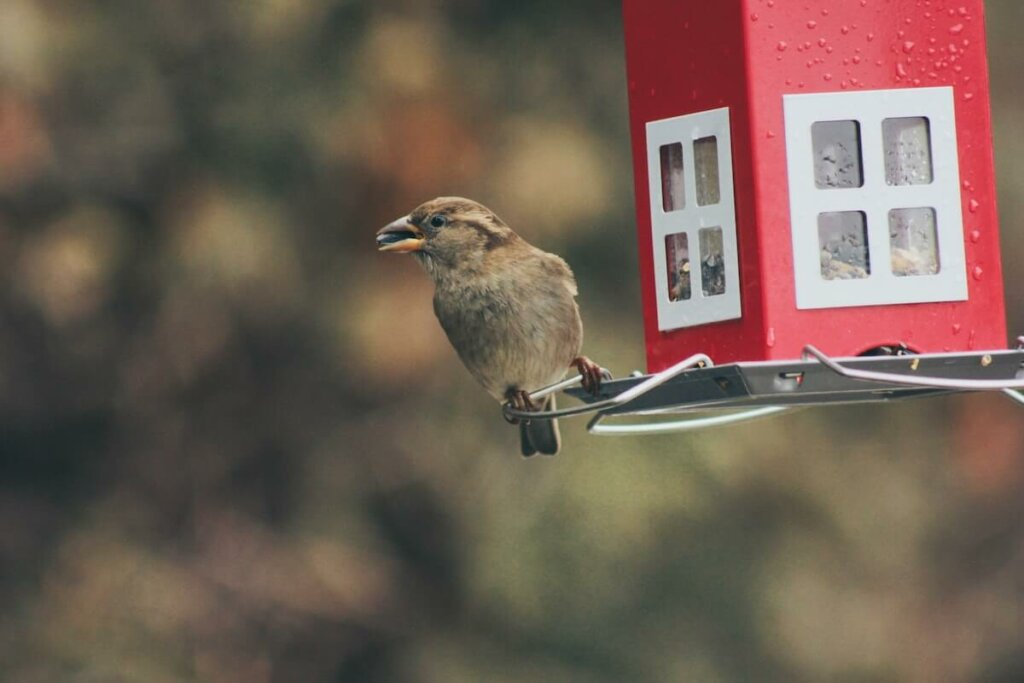 casita para alimentar aves silvestre es un regalo ideal para los amantes de la naturaleza