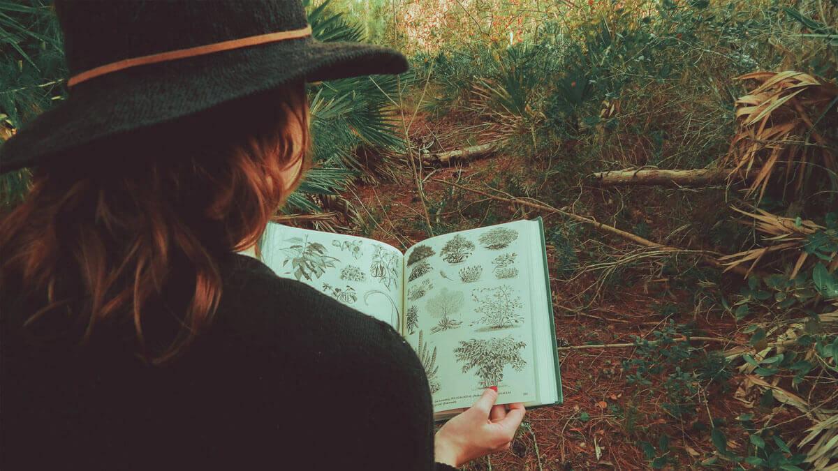 libro plantas medicinales pdf