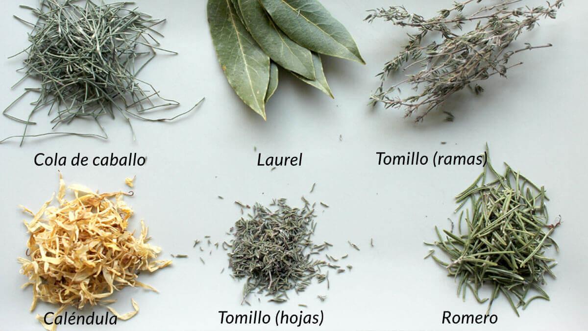 hojas y flores de plantas aromaticas y medicinales desecadas