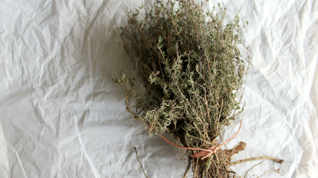 como secar plantas, ramillete tomillo
