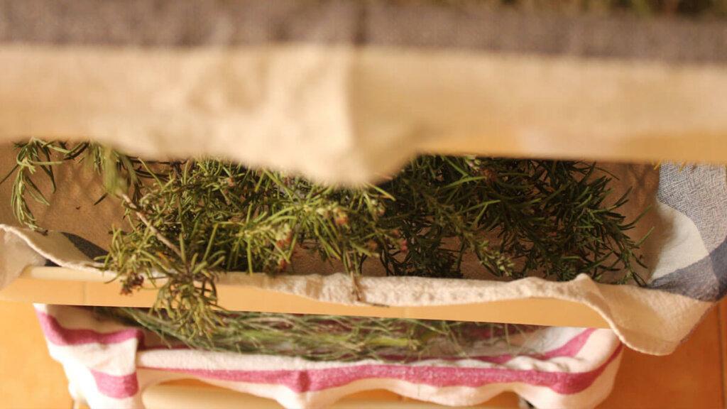 como secar plantas tecnica reticulas