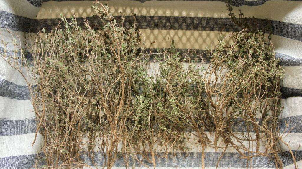 secado de hierbas aromaticas y medicinales