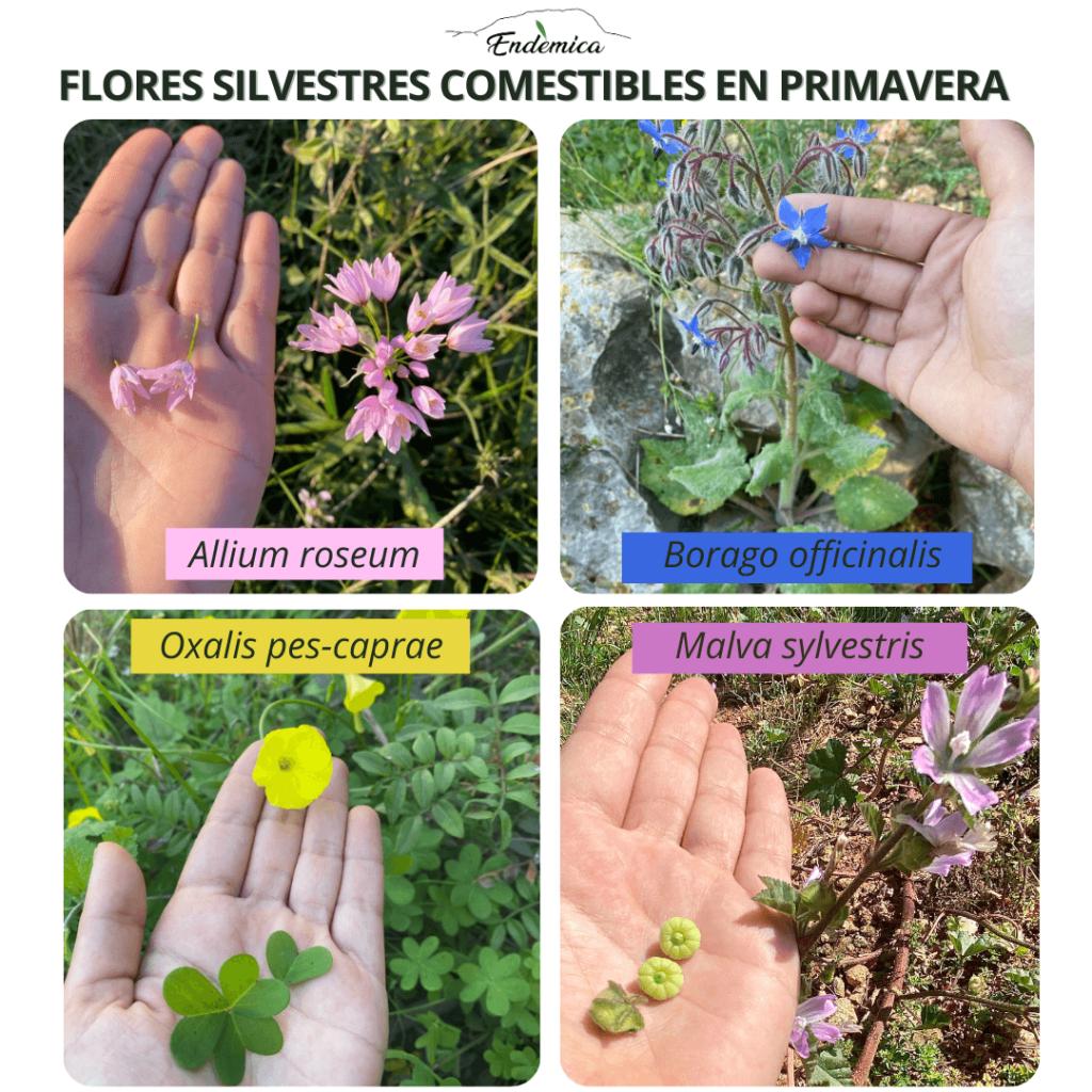hierbas del campo comestibles, identificación, endemicanatura