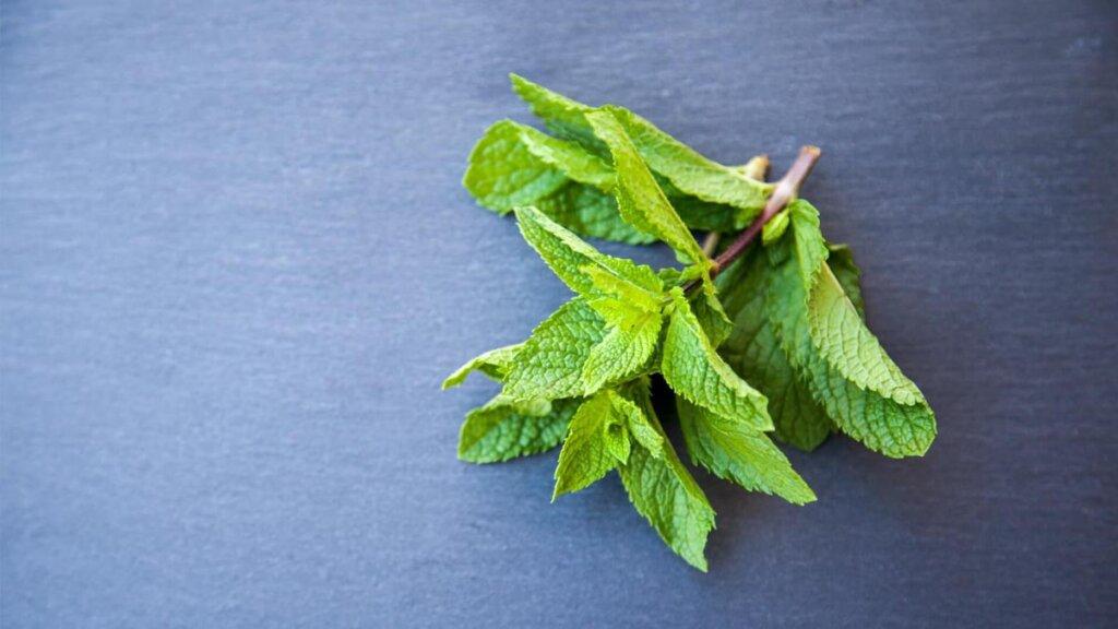 hojas de menta fresca para infusiones digestivas