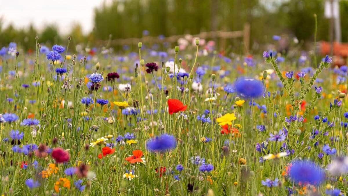 campo de flores con colores