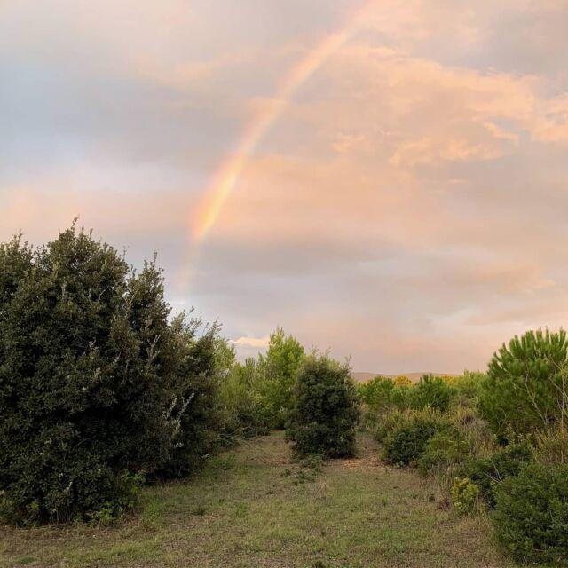 """⠀ """"Nunca encontrarás un arcoíris si estás mirando hacia abajo"""" -⠀⠀ ⠀⠀ 🖌 Charlie Chaplin⠀⠀ ⠀ ⠀ ⠀⠀ Estos días de lluvia he visto varios arcoíris y efectivamente hace un tiempo miro más hacia arriba que hacia abajo 😅⠀⠀ ⠀⠀ ⠀⠀ ⠀⠀ ⠀⠀ ¿Has visto algún arcoíris últimamente?⠀🌈🌈⠀ ⠀⠀ ⠀⠀ ⠀⠀ ⠀⠀ ⠀⠀ ⠀⠀ #arcoiris #arcoíris #arcoiris🌈 #nubes☁ #rainbow #autmn #cielo #otoño #naturaleza #madrenaturaleza #paisajeshermosos #paisajesnaturales #cerdeña #sardinia #rainclouds #weatherphotos #rainbowlovers #rainyday #weather #rainbows #sky #mothernature #instaweather #instarainbow⠀⠀ ⠀"""